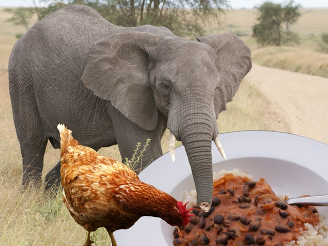 """Click to see """"African Beans"""" and photos of Chimpanzees, Zebra, Lions, Giraffes and other African animals :-)"""